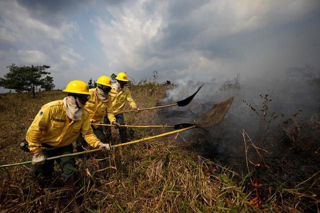 今年以来亚马孙地区森林火灾发生数已突破年历史最高纪录