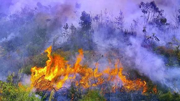 野外遇到林火,如何避险?