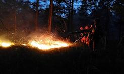 内蒙古大兴安岭林区两起森林火灾均已合围
