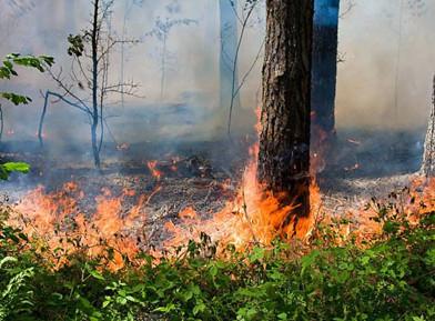 春季如何预防森林火灾?