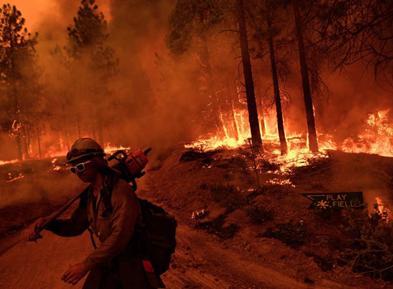 """山火持续 美国加州巨型古红杉穿上""""防火衣"""""""
