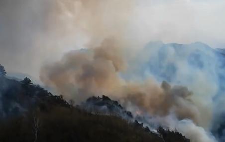 前8月中国累计发生森林火灾525起 伤亡27人