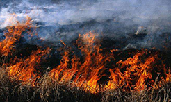 丢烟头 放鞭炮 祭祀用火……云南通报近期10起森林火灾典型案件