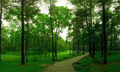 湖南省发布森林火险黄色预警