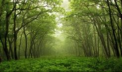 北京发布森林火险橙色预警