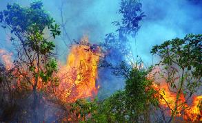 黑龙江省发布森林草原火险预警